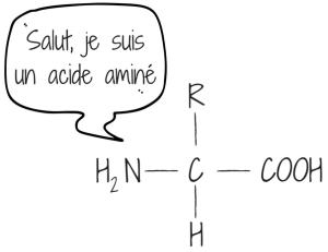 acideaminé